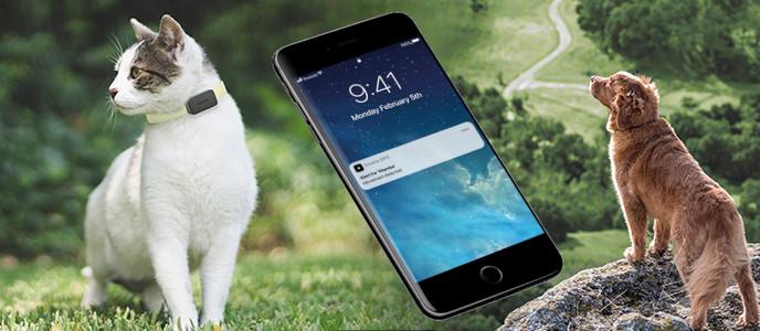 Invoxia GPS Pet Tracker – GPS lokátor pro psy a kočky