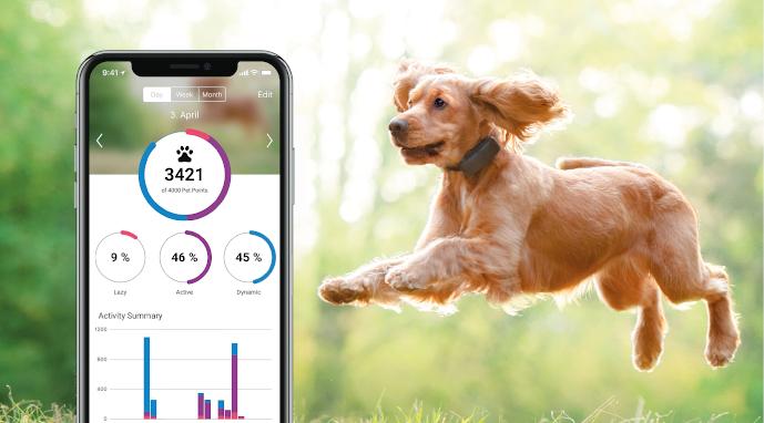 Běžící pes s Tractive GPS Trackerem pro psy a ukázka aplikace
