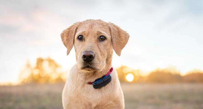 Mokrý pes s Tractive GPS Trackerem pro psy