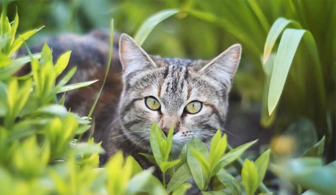 Tractive GPS obojek pro outdoor kočky